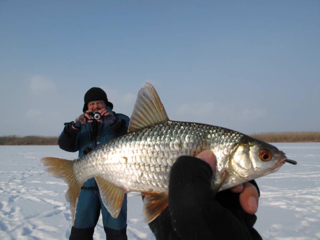 серушка фото рыба